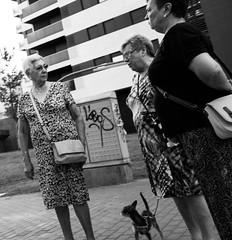 Lobos (Aroca_Antonio_Cainite62) Tags: bn ricoh streetphotography