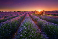 Lavender Castle (albert dros) Tags: albertdros endless fields flowers france landscape lavender provence purple sun sunburst sunset sunstar tourism travel valensole