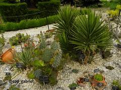 Balchik Botanical Garden (cod_gabriel) Tags: bulgaria balchik balcic dobrogea dobruja dobrudja cadrilater botanicalgarden grdinbotanic gradinabotanica