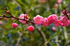 Jin_a06268 (Chen Liang Dao  hyperphoto) Tags:                vacation