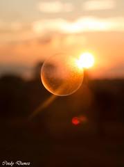 Touch (cindy.dumez) Tags: bulles soleil couchdesoleil canon70d sunset sun bullesdesavon