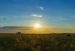 flowersunset (Urs Walesch) Tags: sun sunset ballon flowers cloouds landscape rape poppy