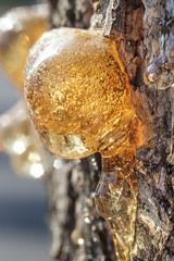 Acacia gum #13 (A_VIN) Tags: nature gum acacia orange