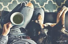 37/52 - a peaceful moment shared... (yookyland) Tags: 52weeksfordogs jasper 2016 3752 dog tea time cuddle