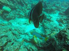 Bunte Fische auf den Malediven