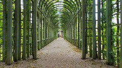 The garden of palace het Loo in The Netherlands (liesanne.spitters) Tags: calming peaceful tunnel color sun nice fresh air dayout beautiful garden palace