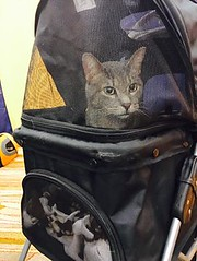 ACTIVE AGING EXPO 9/19/16 (Hospice Hearts) Tags: champaign urbana illinois il hospicehearts wwwhospiceheartsorg ihotelandconferencecenter activeagingexpo 91916 monday september september192016 cat cats dogs dog foster felines feline foreverhome animalrescue rescue volunteer adopt expo catman