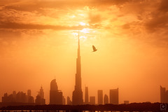 High Flier... (Charlie_Joe) Tags: dubaiburjkhalifarasalkhor uae dubai unitedarabemirates burjkhalifa clouds creek architecture emirates cityscape tallest sunset skyline skyscraper nature urban cloudscape silhouette outdoor landscape water rasalkhor bigstopper travel bird