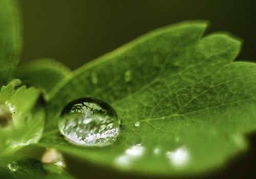 """Waterdrop • <a style=""""font-size:0.8em;"""" href=""""http://www.flickr.com/photos/76866446@N07/7167565856/"""" target=""""_blank"""">View on Flickr</a>"""