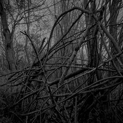 Sticks in the Woods - Version 2 (neil fendell) Tags: lake tree sticks branch essex witham braxted colemansreservoir