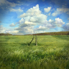 GREEN FIELD (daydreamdph) Tags: green nature field germany deutschland feld grn artdigital naturepoetry memoriesbook platinumheartaward bestcapturesaoi magicunicornmasterpiece mygearandme mygearandmepremium mygearandmebronze mygearandmesilver mygearandmegold mygearandmeplatinum mygearandmediamond bestofshining shiningexcellence ftsmay