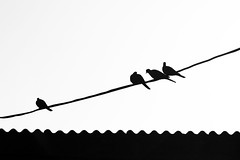 birds on a wire (cyberjani) Tags: sea island blackwhite vis adriatic blackdiamond komia