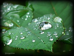 Nature's Tears
