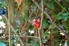 "Red (froggyboggler) Tags: red gnomes fingerpuppet garden"" gardens"" ""jeff ""better dale's"