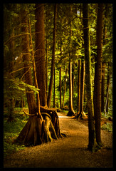roadtorecovery (BettieBlu) Tags: trees colour forest bc hiking trails coquitlam paths hdr nikonflickraward bettieblu