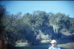 Pat in Fort Ord (earthdog) Tags: park tree film 35mm holga pat toycamera salinas 18 fortord 2011 holga18