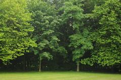 Bume am Dieksee (Platane, Ahorn und Robinie); Lingen GS8_2825 (Chironius) Tags: trees tree germany deutschland see rboles boom arbres acer rbol alemania platanus fabaceae albero bume allemagne arbre rvore baum trd germania emsland lingen aa niedersachsen  nelumbonaceae robinia  platanen dieksee platanaceae  fabales schmetterlingsbltler rosids faboideae robinie proteales   platanengewchse silberbaumartige robinien gauerbach hlsenfrchtler robinieae schmetterlingsbltenartige laxten gauerbachsee fabids