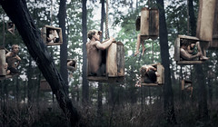 All In Our Boxes (Rob Woodcox) Tags: trees strange forest dark thought surreal eerie creepy conceptual expansion provoking shaneblack caseymaxwell jacobprice davidtalley robwoodcox robwoodcoxphotography bradwagner joelrobison cameronbushong verabenschop kristianirey midwestmeetup2012