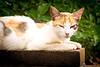 Biscuit (Juan Antonio Capó) Tags: pet animal cat kat feline chat fuji pussy kitty gato felino fujifilm katze mace 猫 gatto חתול mascota kot gat kočka kedi gatito kissa köttur mačka kucing x10 pusa mèo moix گربه кошка kitti 고양이 minino γάτα мачка котка pisică แมว قط кішка 잭 קאַץ վալետ िल्ली fujifilmx10 fujix10
