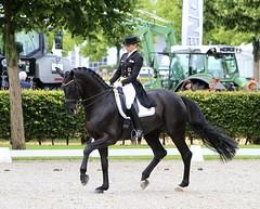 IMG_2512 (neulands) Tags: horses cheval pferde dressage grandprixspecial dorotheeschneider divaroyal chioaachen2012