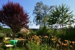 DSC_0991-1 (Chaumurky) Tags: h garden