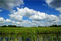 Lowlands (Hindrik S) Tags: lowlands heiteln frysln friesland nederland sky bluesky blue clouds wolken lucht loft green grien groen greide weide westeinde water fiver vijver pond bollepysten tuorrebout lisdodde summer sigma simmer zomer weather waar weer mooiweer moaiwaar cattail sonyphotographing sony sonyalpha a57 57 slta57 1750 tamron1750 tamronspaf1750mmf28xrdiiildasphericalif tamron