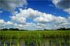 Lowlands (Hindrik S) Tags: lowlands heitelân fryslân friesland nederland sky bluesky blue clouds wolken lucht loft green grien groen greide weide westeinde water fiver vijver pond bollepysten tuorrebout lisdodde summer sigma simmer zomer weather waar weer mooiweer moaiwaar cattail sonyphotographing sony sonyalpha a57 α57 slta57 1750 tamron1750 tamronspaf1750mmf28xrdiiildasphericalif tamron 2016