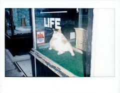 (Ben Gibb) Tags: cats instax 300 cat instaxwide jamaica plain boston instantfilm fuji