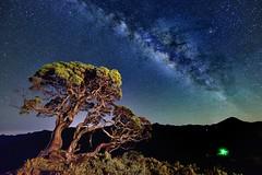 ~~ Single-seed Juniper Milkyway (Shang-fu Dai) Tags:  taiwan  hehuan nikon d800 landscape formosa 3422m  galaxy milkyway singleseedjuniper      sky  afs1424mmf28