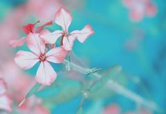 Wild flowers (shannon4462) Tags: wildflowers hss