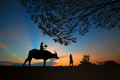 friend (1 of 1) (tanongsaksangthong) Tags: animal asia asian background black boy buffalo child girl ha happy leisure lifestyle meadow outdoor people ride sunset thai thailand vietnam water white young