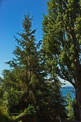 Canon EOS 5D Mark III - IMGL5613 (rogerbtree) Tags: tree pruning trees arborist view service views chainsaws shoreline wa innis arden barnett care arboriculture