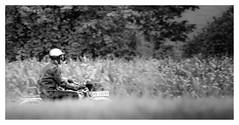 The Biker (memories-in-motion) Tags: bike motor motorbike motorrad alt vinatge cruise freedom drive helmet motorradfahrer geniessen enjoy ride felder fields black white frame mono vilsbiburg traffic rural canon sigma tele moment summer mood passion