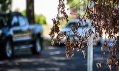 walk around the neighborhood (Dotsy McCurly) Tags: walk around neighborhood nature beautiful cars dof bokeh nikon d750 nj light shadows