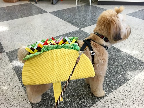 Leia might be a taco for Halloween.