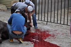 DSC_0011 () Tags: musulmani moschea xian cina festival sacrificio mucca pecora beef sacrifice china mosque
