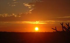 Magical Glow (shelley.sparrow) Tags: sun warmeveningglow shelleysparrow brisbane australia queensland nikon bright