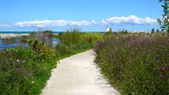 Checking out Southampton's Shores (Craig James White) Tags: canada ontario brucecounty saugeenshores southampton lakehuron beach naturewalk wildflowers