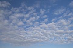 Ciel pommelé (Titole) Tags: sky clouds pommelé titole nicolefaton cielpommelé