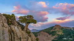Sierra Magic - El Dorado County, California (Tactile Photo | Greg Mitchell Photography) Tags: landscape soft eldoradocounty clouds bluesky carsonpass lonetree sierranevada tree california august thursday granite color pine sunset light