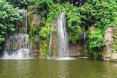 LA CASCATA    ----    THE WATERFALL (Ezio Donati) Tags: acqua water nikond810 foresta forest natura nature cascate waterfall alberi trees panorama landscape africa cameroun