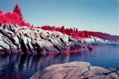 Bold Coast (rsieber82) Tags: boldcoast cutler kodak film 35mm infrared aerochrome iii nikon f3 f3hp helios 44 442 58mm f2 roger sieber maine atlantic ocean coast hiking nature outdoors wilderness foliage
