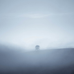 A Tree As Old As Me (ChrisDale) Tags: chrisdale chrismdale cloud dawn fog haze hudswell inversion landscape marske mist morning northyorkshire northyorkshiredales richmond sunrise swaledale trees yorkshiredales