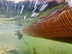 Motion under water... (deanspic) Tags: 100paddles 79100 canoe canoeing paddle paddling cornwallcanal underwater undercanoe embankment
