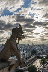 Gargola Notre Dame (mallatesta) Tags: mallatesta paris francia france vacaciones holidays gargola gargoyle diablo devil d5000 riosena sena iglesia church catedral cathedral