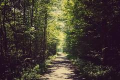 im Wald (phozuppel) Tags: wald bayern spaziergang sonne licht sommer alpbachtal osterhofen