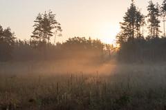 Sonnenaufgang im Wald - Sunrise in the forest-0731 (Holger Losekann) Tags: sonnenaufgang sunrise nebel fog mist bume trees wald forest wood