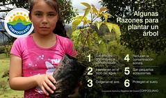 Algunas razones para plantar un rbol: (Corporacin Autnoma Regional del Guavio) Tags: car corpoguavio corporacinautnomaregionaldelguaviocorpoguavio agua colombia cundinamarca comprometidos asocars minambiente abejas conservacin paz