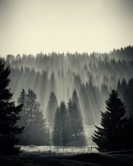 Altopiano di Vezzena (Donald G. Jean) Tags: donaldgjean nikon d3x nikkor 10514e italy trentinoaltoadige sunset forest silhouette