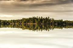 Canada reflection (mystero233) Tags: canada reflection lake water upsidedown turned 180 muskoka forest wood trees tree autumn